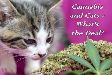 cannabis for cats yes or no
