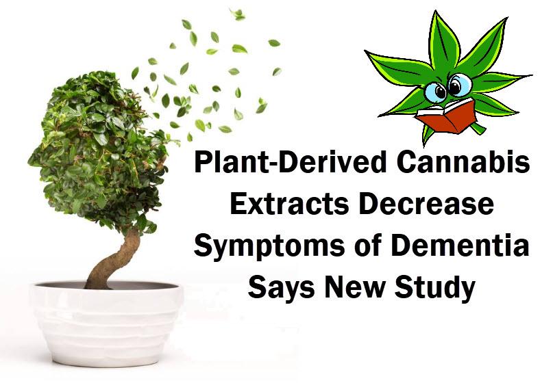 cannabis for dementia
