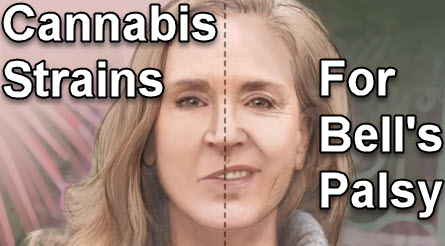 marijuana strains for bell's palsy