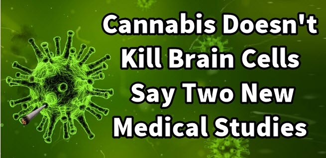 cannabis brain cells