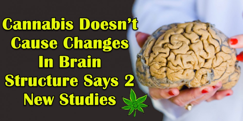 HOW CANNABIS EFFECTS BRAIN STRUCTURE