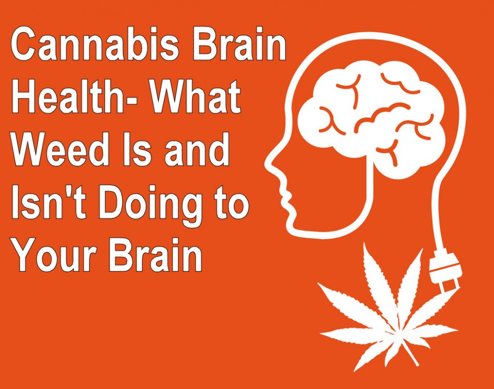 cannabis affects on the brain