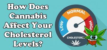 CANNABIS AND HEALTHY CHOLESTROL