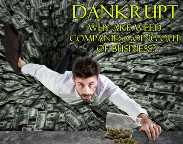 DANKRUPT - WHY CANNABIS BUSINESSES ARE CLOSING
