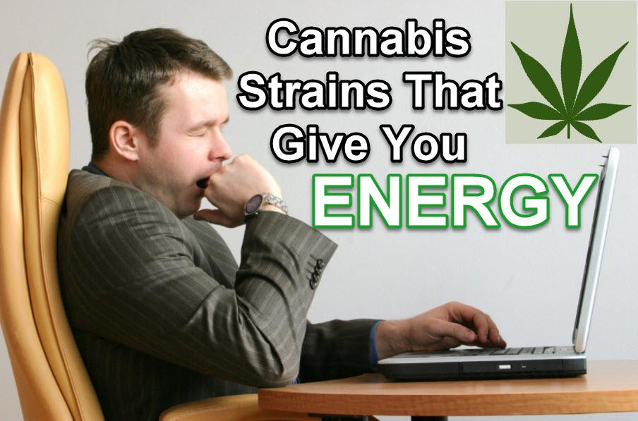 CANNABIS STRAINS FOR ENERGY