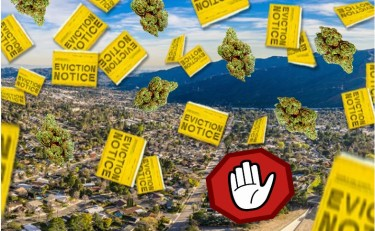cannabis eviction notices