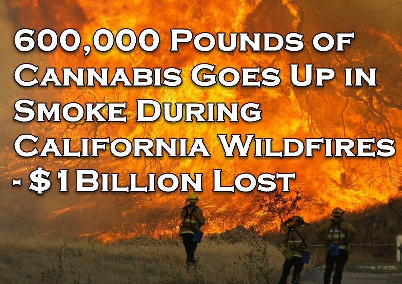 cannabisfire - Cannabis and the California Wildfires