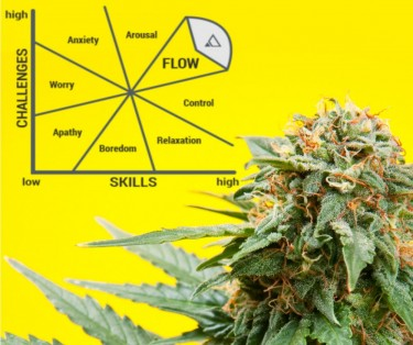 CANNABIS AND THE FLOW STATE