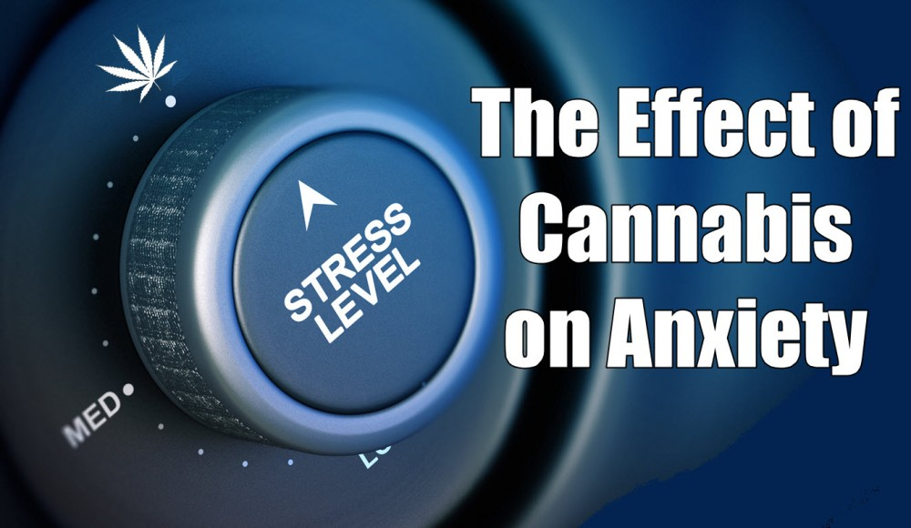 CANNABIS EFFECTS ON ANXIETY AND STRESS