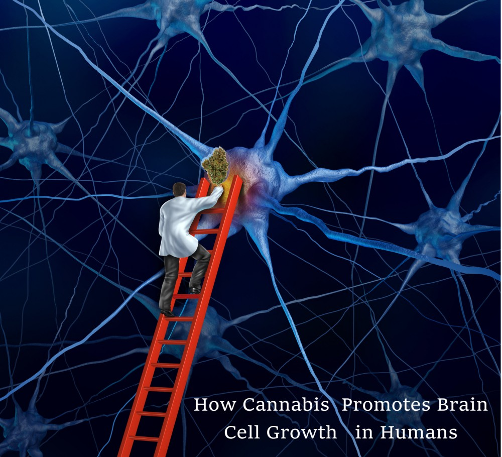 cannabis for brain cell growth