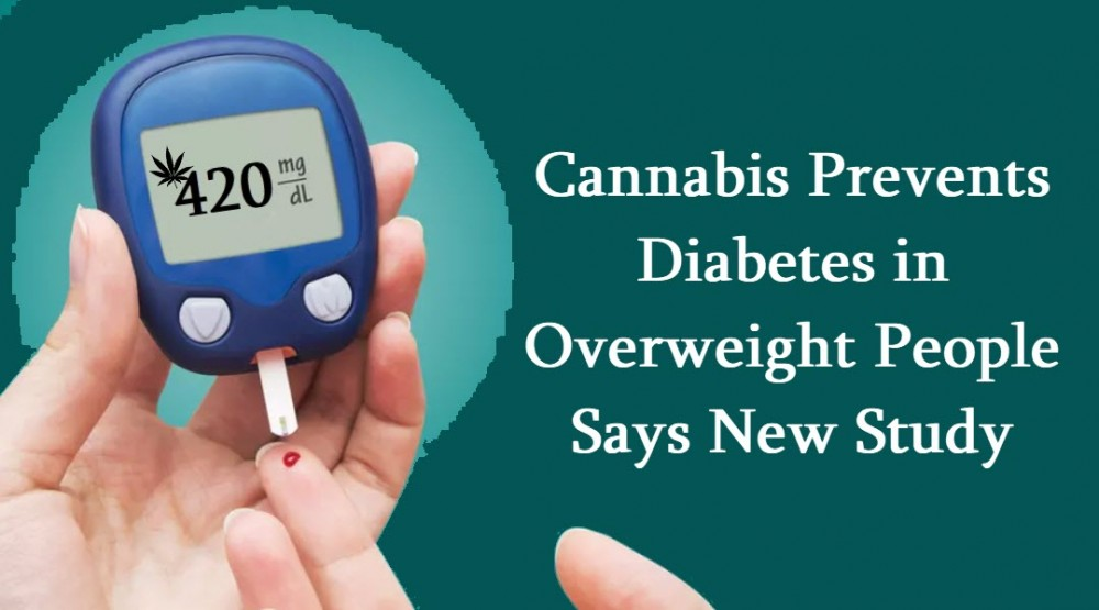 cannabis for diabetes in overweight people