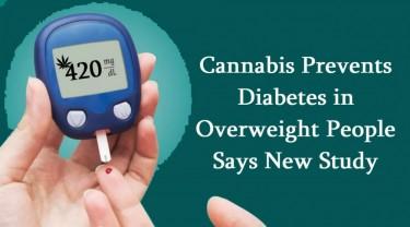 CANNABIS FOR DIABETES