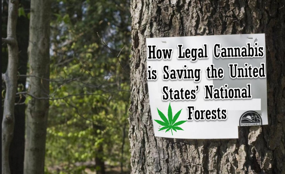 cannabis forests