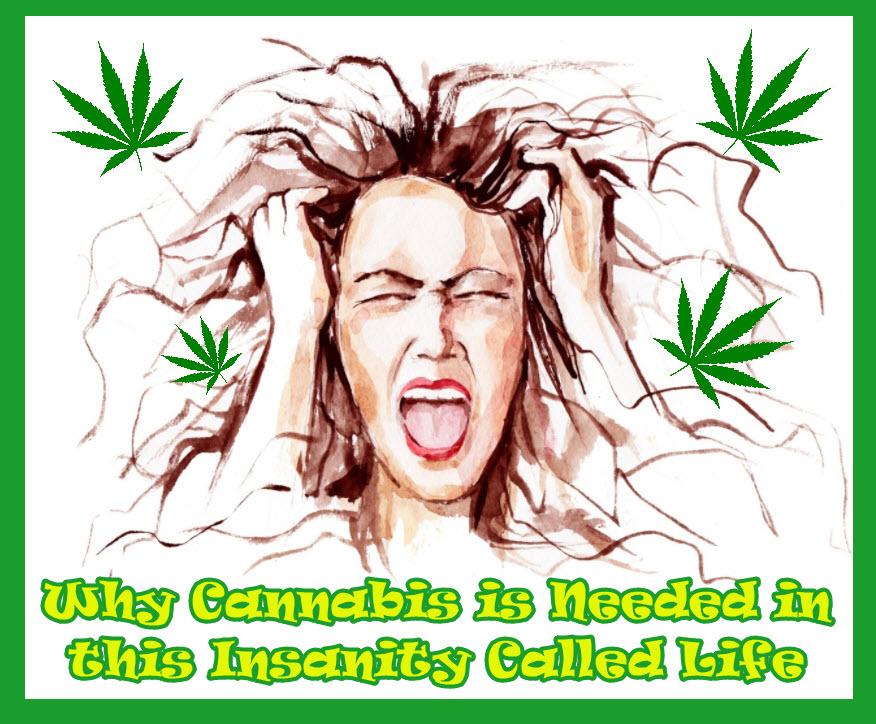 cannabis for insanity