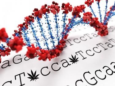 cannabis gene sequencing