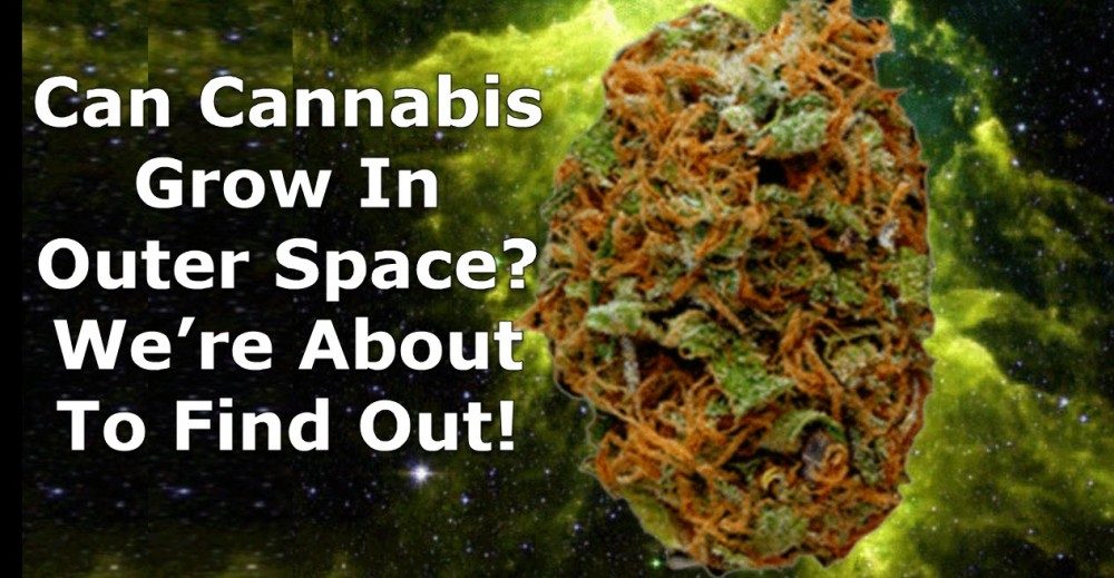 CANNABIS GROWING IN OUTER SPACE