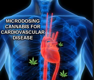 MICRODOSING CANNABIS FOR HEART HEALTH