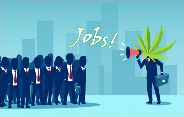 cannabis job growth in the industry