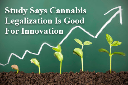 INNOVATION CANNABIS MARIJUANA