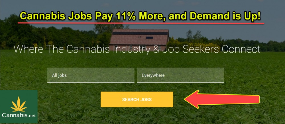 cannabis jobs pay more