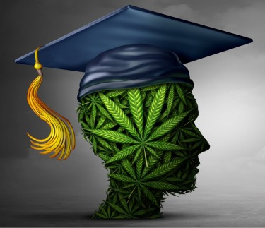 cannabis education in college