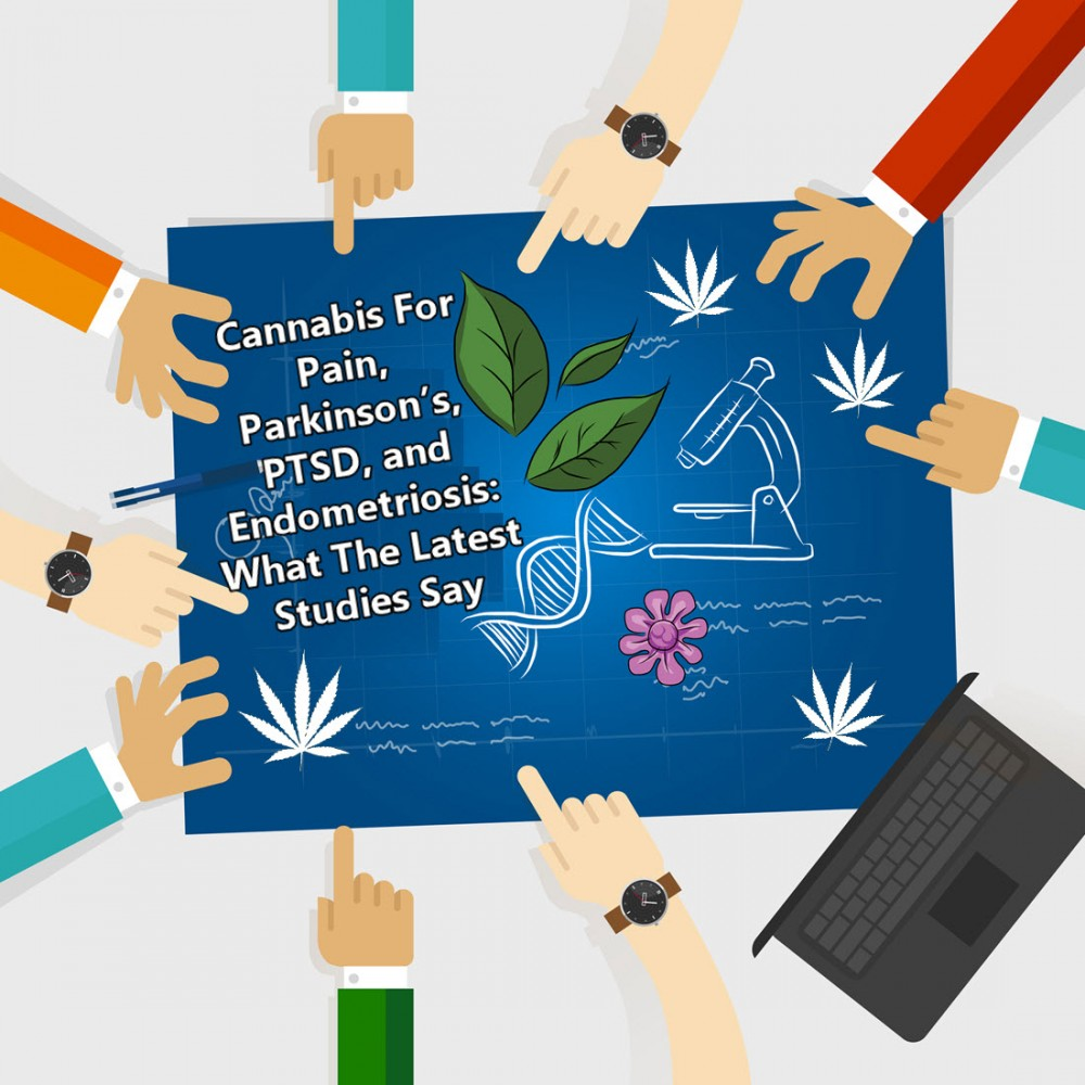 medical cannabis studies update