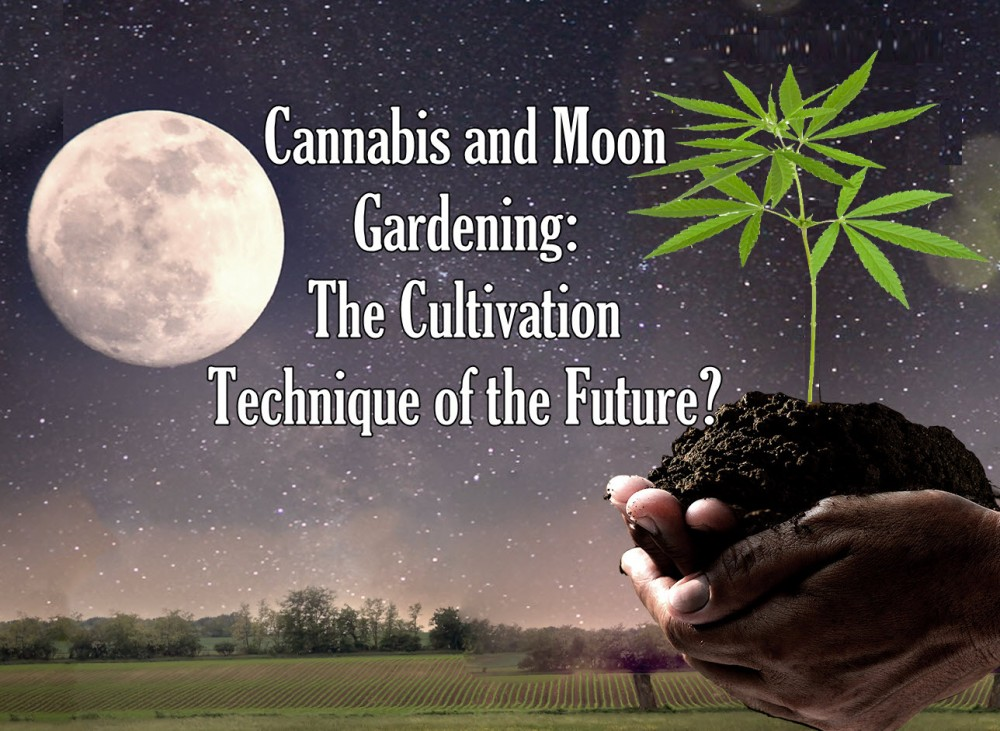 cannabismoongardening - How Does the Moon Affect Your Cannabis Plants When You Crop Out?