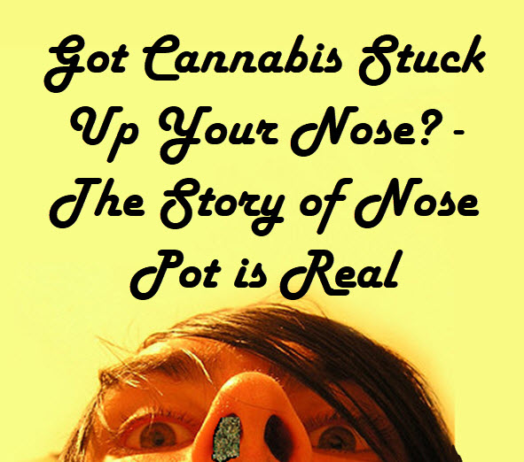 cannabis up your nose