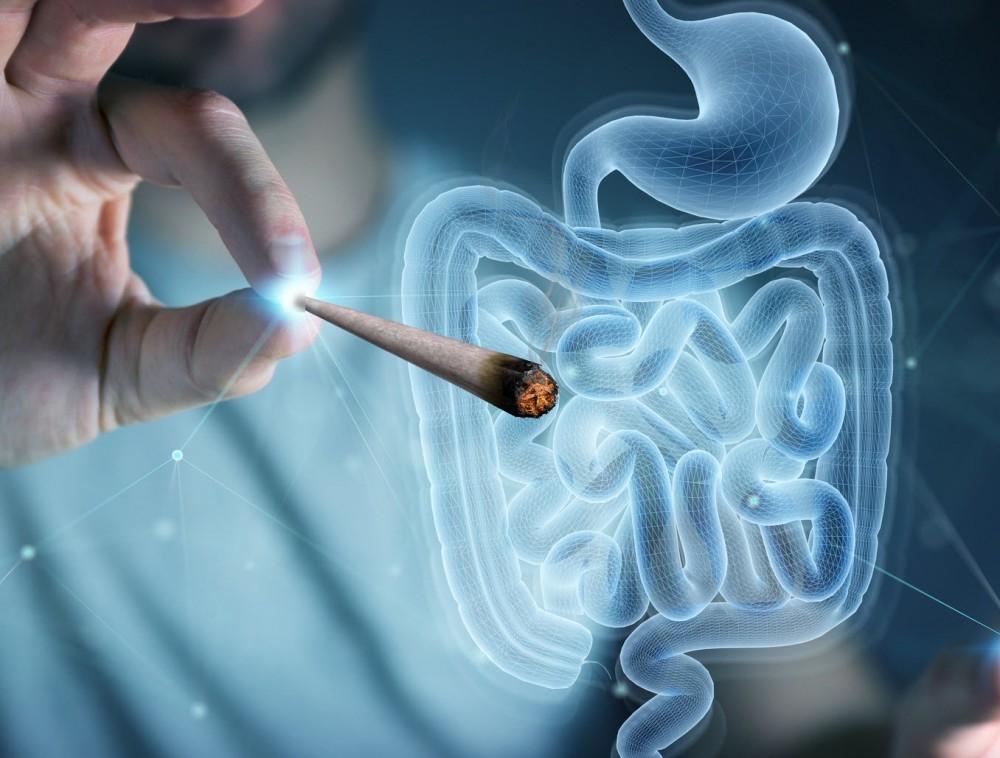 cannabis for gut health