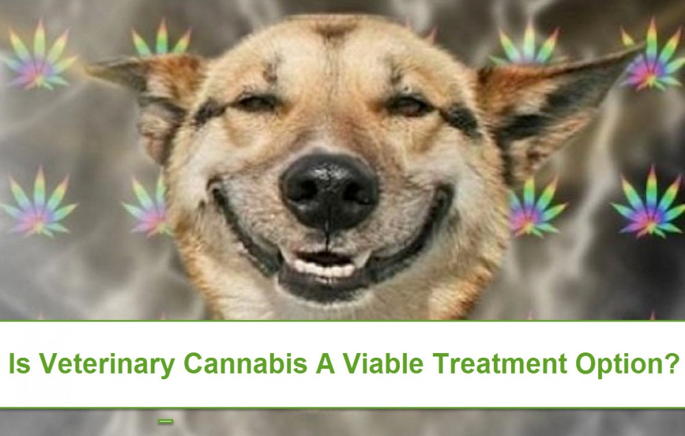 CANNABIS AT THE VETS FOR ANIMALS
