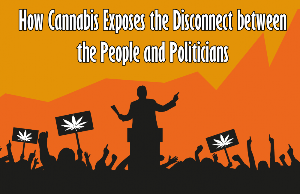 cannabis and politicians