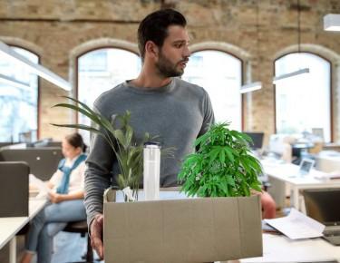 cannabis resignations