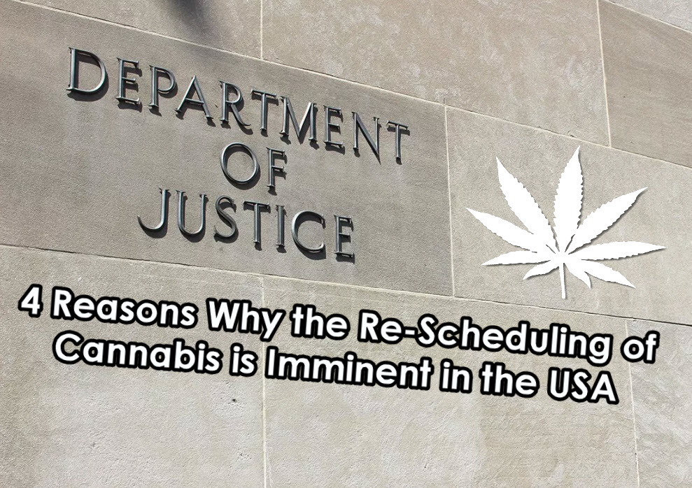 cannabis and the dea schedule 1