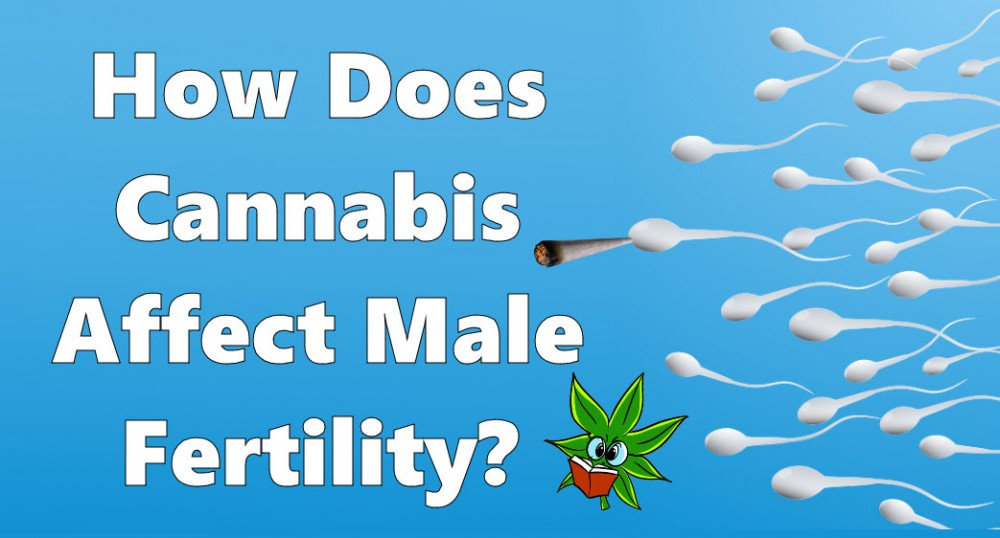 cannabisspermcount - How Do You Get Cannabis-Infused Semen? - New Study Looks if THC is Present in Sperm Tests