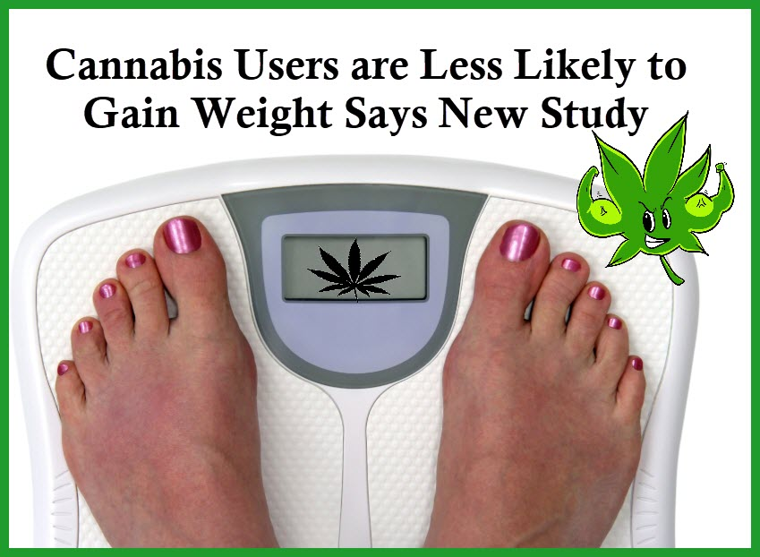 cannabis stops weight gain