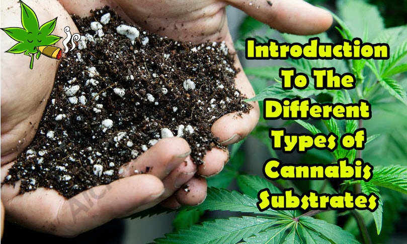CANNABIS GROWING SUBSTRATES