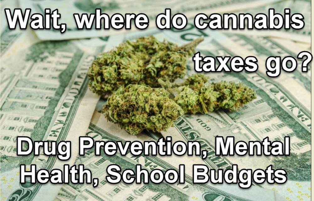 cannabis taxes pay for what