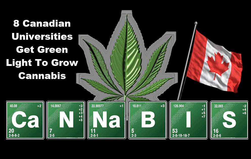 canadian universitises growing cannabis