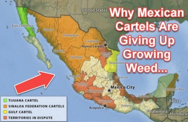 MEXICAN CARTELS GIVE UP GROWING WEED