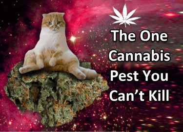 MARIJUANA PLANTS AND CATS