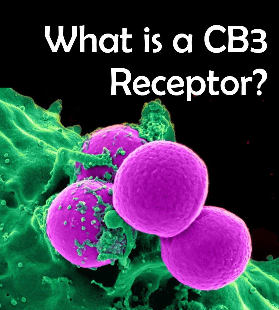 cb3 receptors