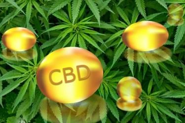 cbd capsules best on market