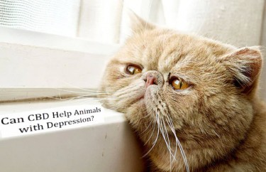 animal depression and cbd oil