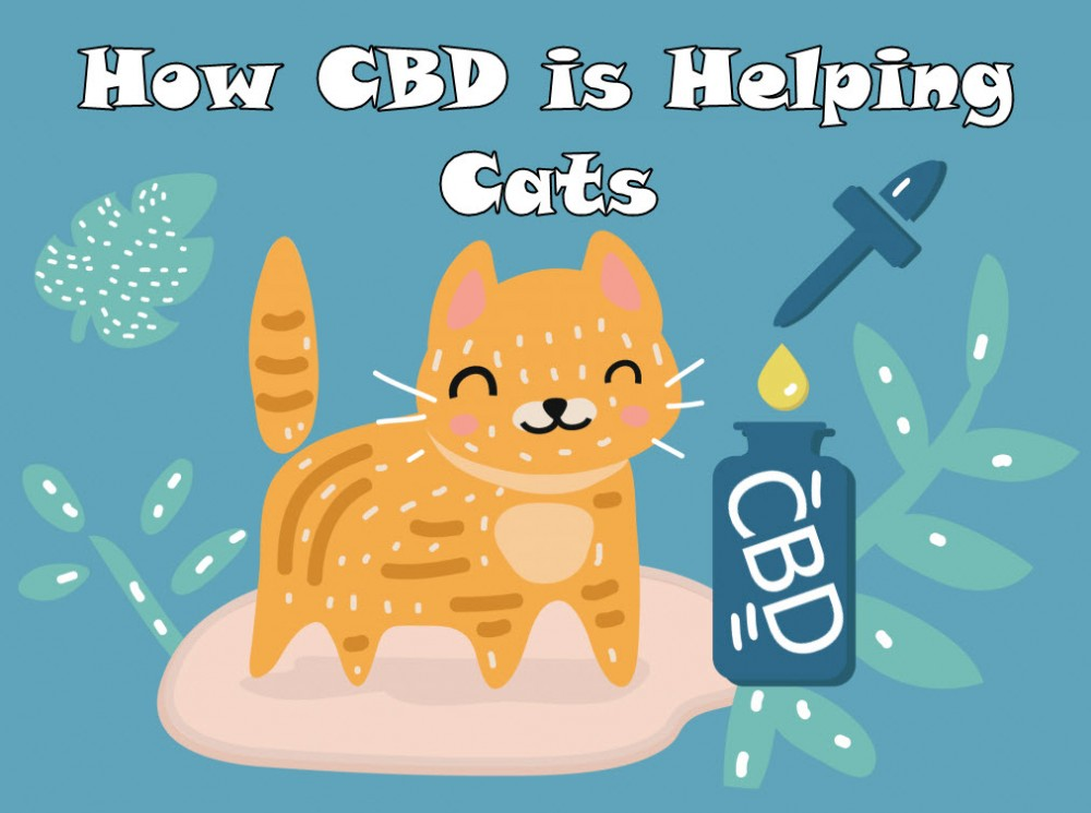 CAN CBD BE GIVEN OT CATS