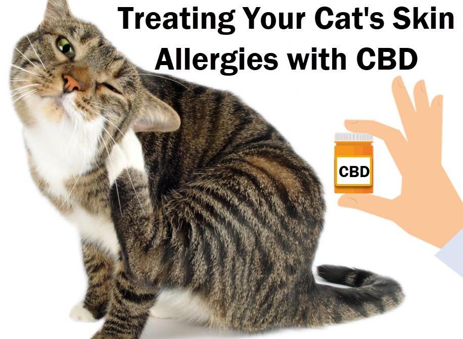 CAT SKIN ALLERGIES AND CBD