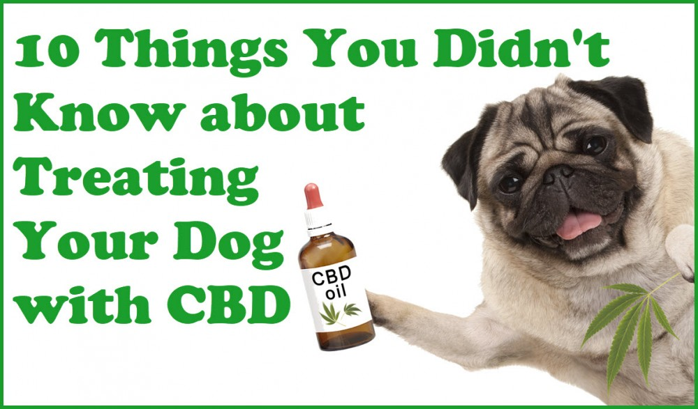 DIRECTIONS ON CBD FOR DOGS