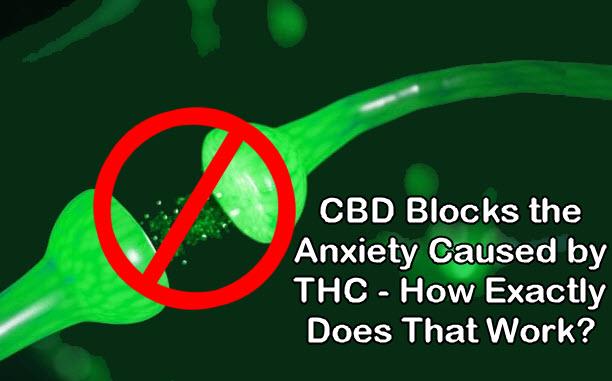 cbd blocks anxiety from thc