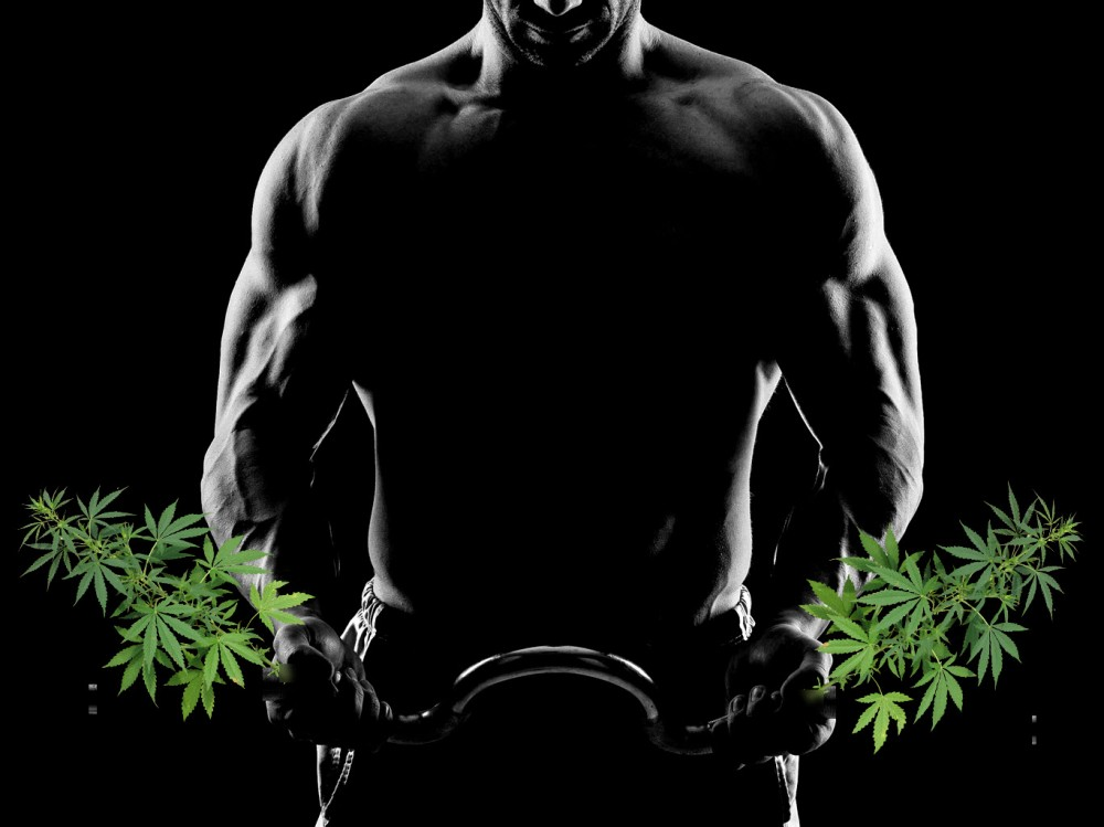 cbd muscle gains