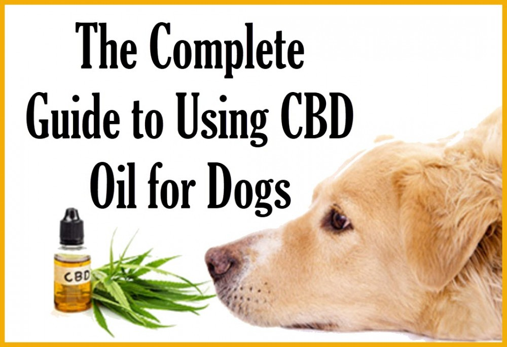 CBD OIL FOR DOGS GUIDE