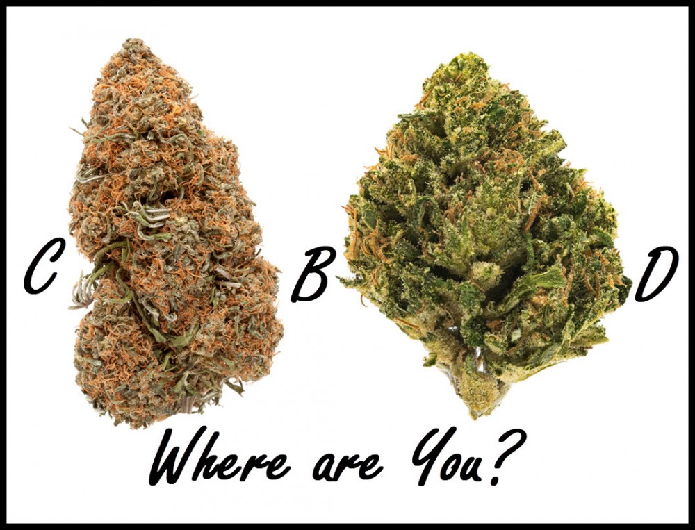 cbd strains of hemp and cannabis
